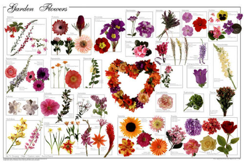 EDUCATIONAL CHART NEW LICENSED WALL ART GARDEN FLOWERS POSTER 61X91CM