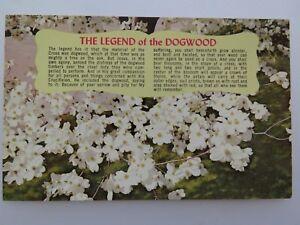 Postcard-The-Legend-of-the-Dogwood-9491
