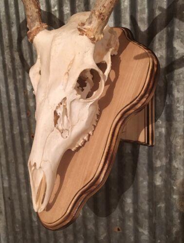 European Deer Skull Mount Wall Table Pedestal Plaque Poplar Burned