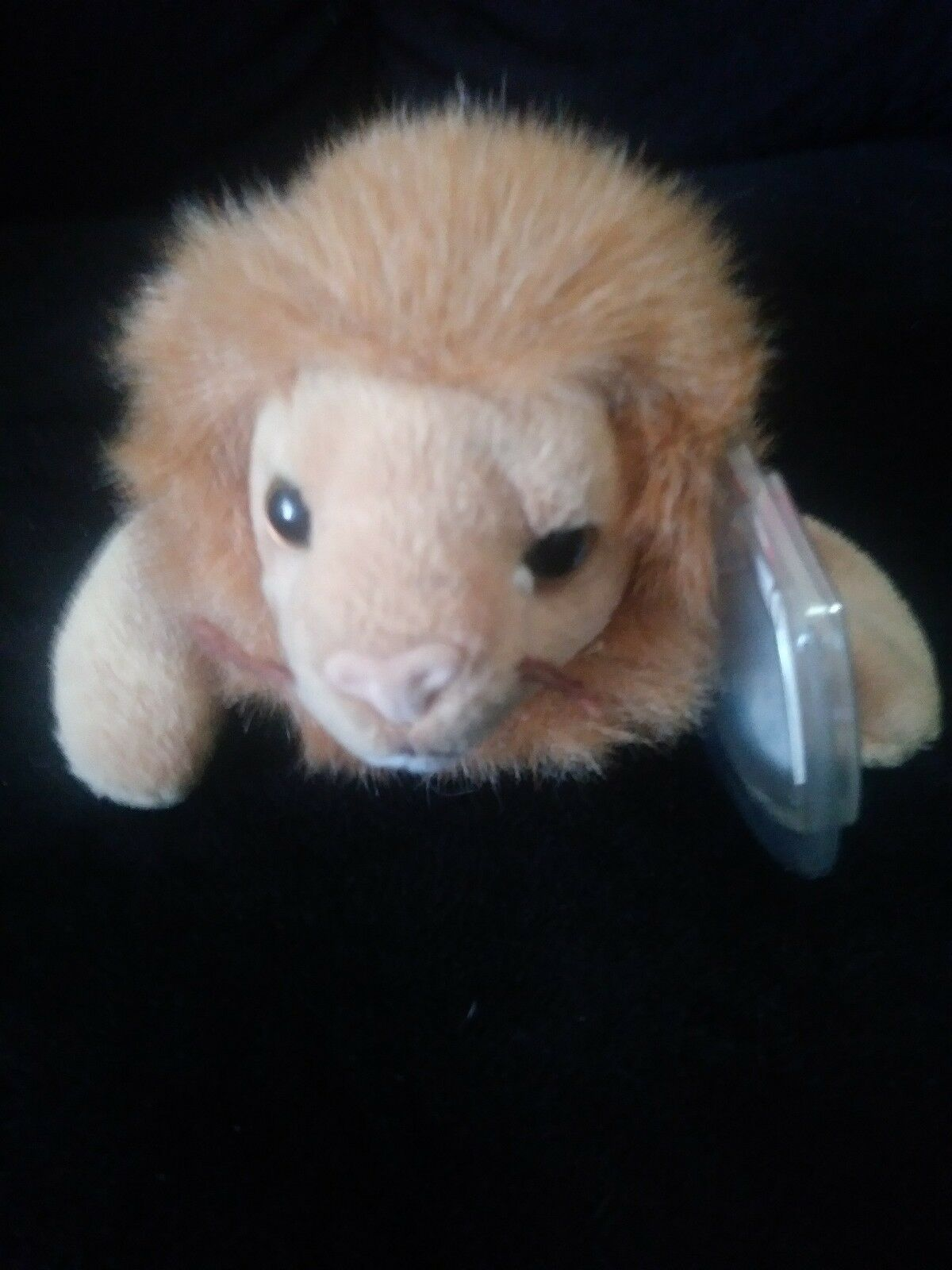 c25a49f1557 ... TY ROARY ORIGINAL BEANIE BABY - 1996 LION ROARY TY (With Errors) Very  Rare. ""