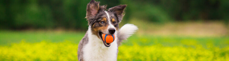 Compra aquí - Esenciales para tu mascota