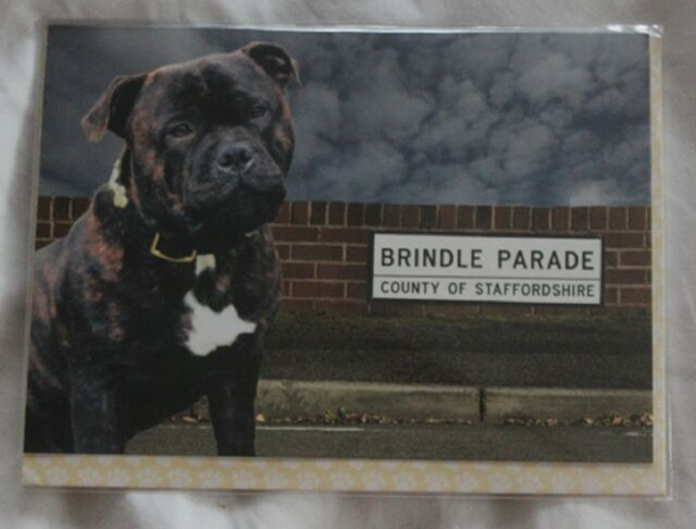 STAFFORDSHIRE BULL TERRIER CARD (brindle)