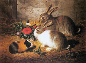 Pet Rabbits by F Schlesinger Art Children Feeding Bunny Animals  8x10 Print 309