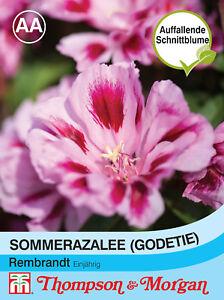 ca Godetia amoena Sommerazalee /'Rembrandt/' 400 Samen 9091