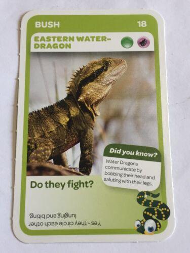 Taronga Zoo Woolworths Aussie Animal Card #18 Eastern Water Dragon