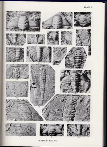 1982 Paleontology THE CAMBRIAN ORDOVICIAN BOUNDARY Fossils Trilobites Geology