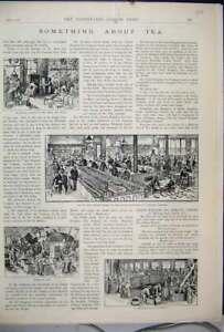 Original-Old-Antique-Print-1893-Tea-Chests-Blending-Tasting-Rooms-United-Kingdom