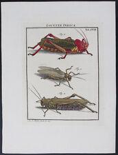1740,ROSEL ENTOMOLOGY HandPainted COPPER LARGE PAPER COPY V1B