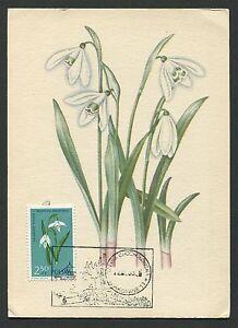 La Pologne Mk 1963 Flore Fleurs Flowers Maximum Carte Carte Maximum Card Mc Cm C9341-afficher Le Titre D'origine Facile à Lubrifier