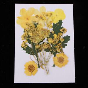 1Bag-Pressed-Dried-Leaves-Flower-Scrapbooking-Card-Making-Art-Craft-Material