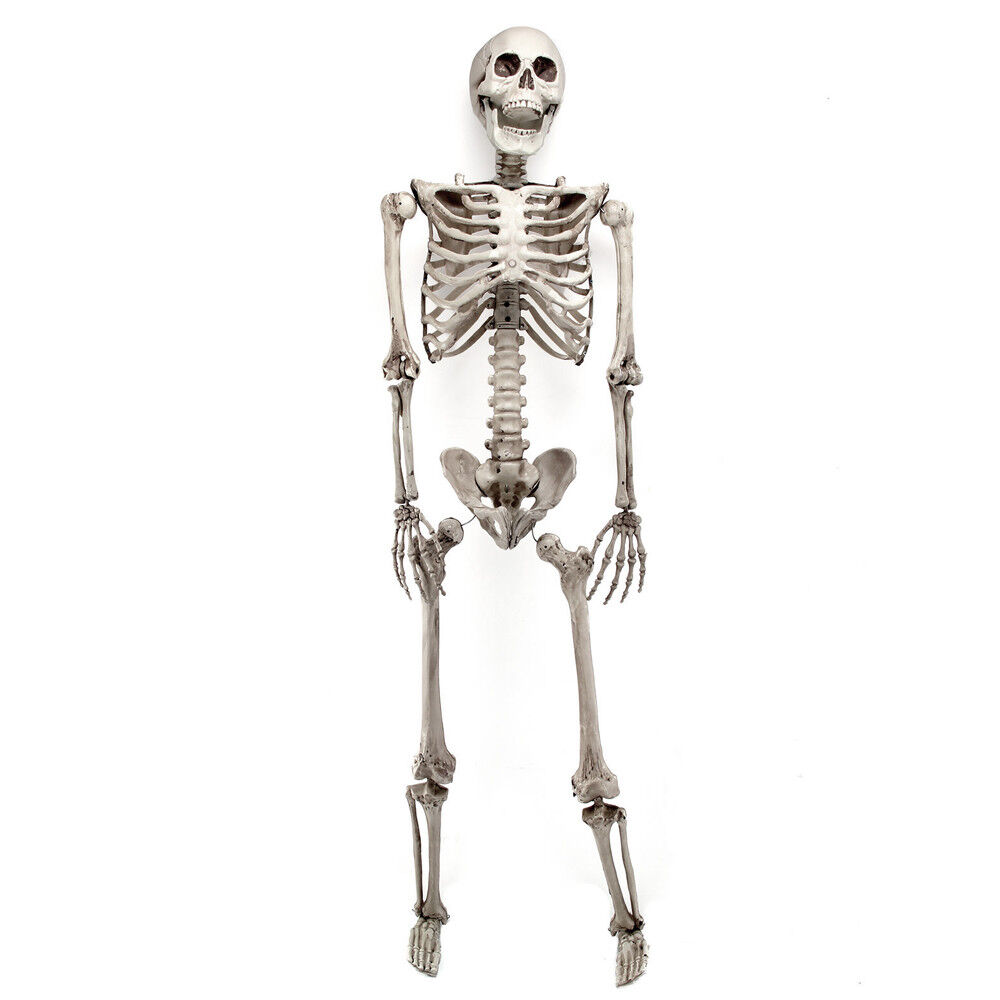 5 6ft Halloween Poseable Human Skeleton Full Life Size Props Party Decoration