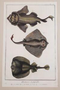 PESCE-ANGELO-RAZZA-TORPEDINE-TORPEDO-DIDEROT-D-ALEMBERT-BARATTI-RAY-ANGEL-FISH