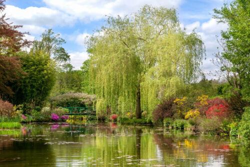 VLIES Fototapete-MONETS GARDEN- 1088V -Garten Natur Pflanzen Blumen Blütten