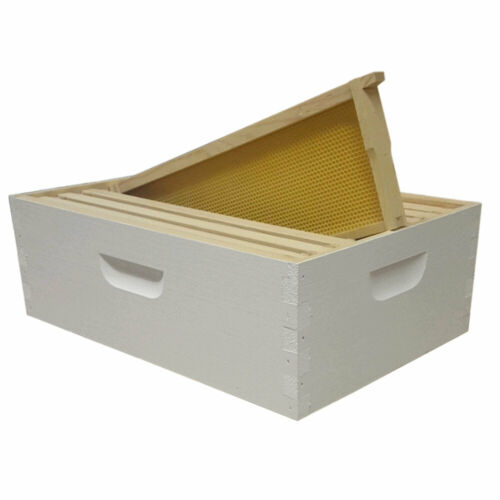 Assembled /& Painted Langstroth 8 Frame Medium Box w// Frames and Foundations