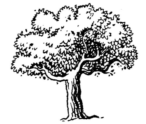 Unmounted Rubber Stamps Scenic Stamps Four Seasons Tree Set Trees Leaves