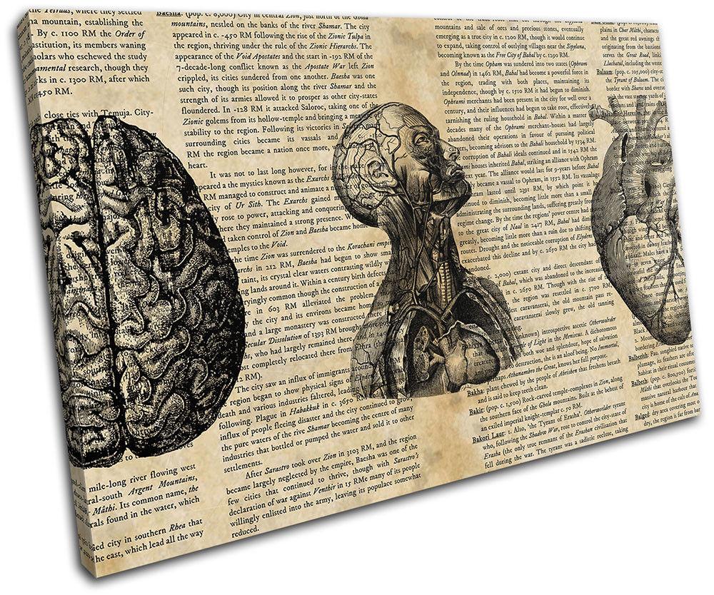 Anatomical Sketch Shabby Chic Vintage SINGLE LONA Foto pa rojo  arte Foto LONA impresion a305b0
