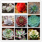 21 Kinds Succulents Seeds Potted Plant Flower Office Home Balcony Decorative