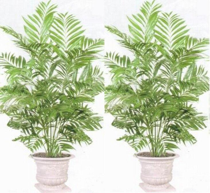 2 PHOENIX 4' PALM ARTIFICIAL SILK TREE PLANT BUSH ARRANGEMENT FLOWER not potted