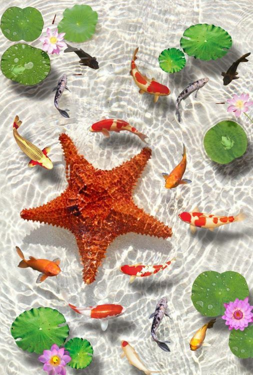 3D Starfish Lotus Floor WallPaper Murals Wall Print Decal 5D AJ WALLPAPER