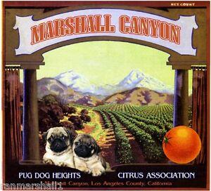 Marshall Canyon Pug Dog Orange Citrus Fruit Crate Label Art Print