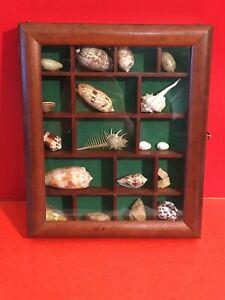 Objet-de-vitrine-collection-de-coquillages-034-0097-034