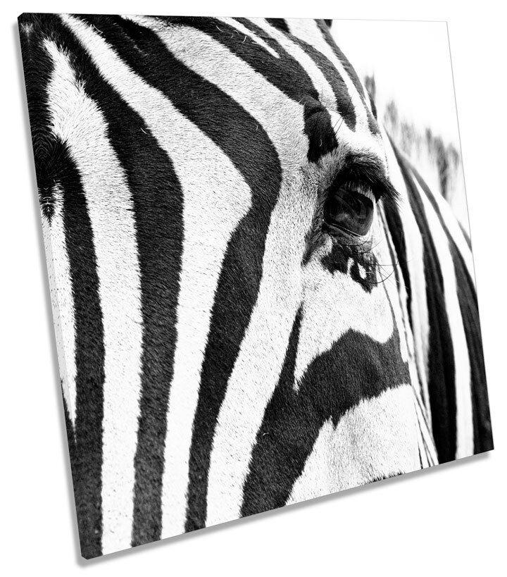Strisce Zebra Animale SQUARE CANVAS Wall Art Print Picture