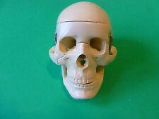 Novelty Human Skull Hinged Jaw  Horror Halloween NEW Skeleton Toy Scary Fun
