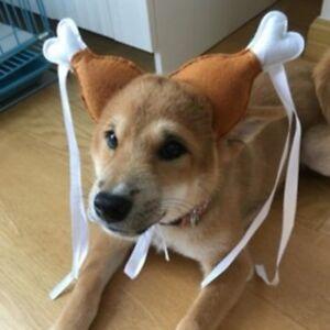 ce2ea6fd0f Image is loading Turkey-Funny-Chicken-Drumstick-Headband-Dog-Cat-Headdress-