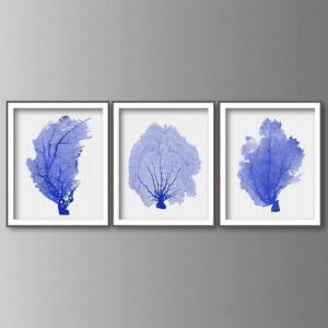 coral print wall art in cobalt blue set of 3 coral art prints fan