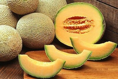 VEGETABLE  MELON CANTALOUPE HEARTS OF GOLD  100 SEEDS