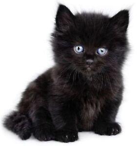 Sticker-decal-wall-fridge-children-room-animal-decorate-black-cat-kitten