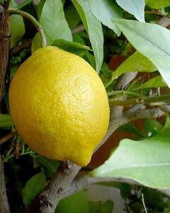 Huile-Essentielle-Citron-10ml-pure-naturelle-Italie
