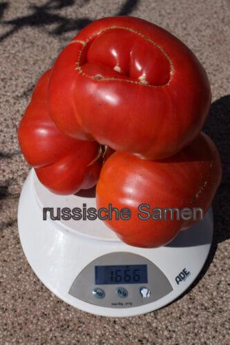 Neu 2019! Tomatensamen UKRAINISCHE GIGANT 10 oder 50 Samen
