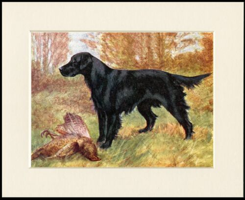 FLAT COATED RETRIEVER DOG AND BIRD GREAT DOG PRINT MOUNTED READY TO FRAME
