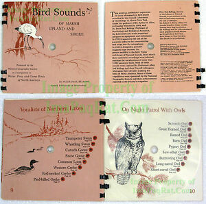 Bird-Songs-of-Marsh-Upland-amp-Shore-National-Geographic-33-1-3-LP-Record-1965