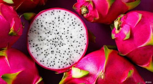 Night-Blooming Cereus Dragon Fruit Hylocereus undatus 10 Seeds Free US Shipping