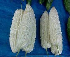 RARE White Bitter Melon/Bitter Gourd (Beauty Winner) 10 Seeds