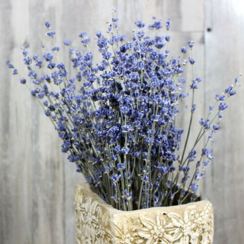 Dried Natural LAVENDER French Provence Bunch Fragrant Tied Decor 50//100 Stems