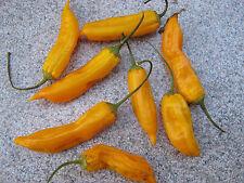 Aji Golden Chili 5 Samen Chilisamen