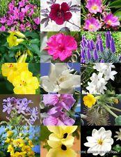SPRING FLOWERING PLANTS MIX wild flower blooming garden plant yard seed 25 seeds
