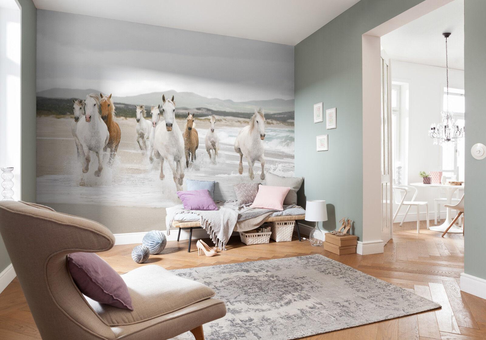 Weiß Horses - - - Fototapete 368 x 254cm - Wildpferde, Strand, Meer, Pferde - Komar 8b7301