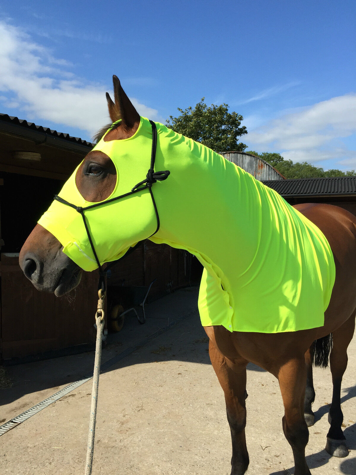 Fluorescent orange  horse hood