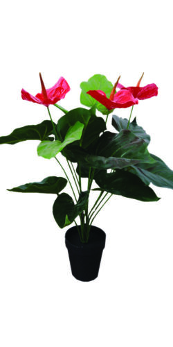 55cm Peace Lily 1002 *CLEARANCE SALE!* Artificial Red Spathiphyllum