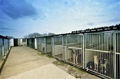 dog kennel business plan uk