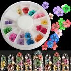 12 Color 36pcs Real Dry Dried Flower 3D UV Gel Acrylic False Tips Nail Art Salon