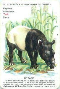 Tapire-Tapir-Tapires-PLAYING-CARD-CARTE-A-JOUER-OLD-ANCIEN