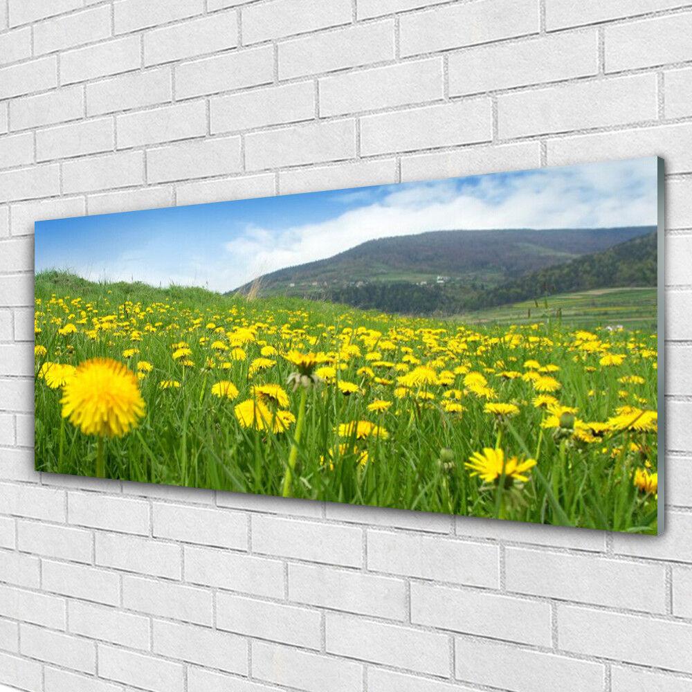 Impression sur verre Image tableaux 125x50 Nature Pissenlit Champ