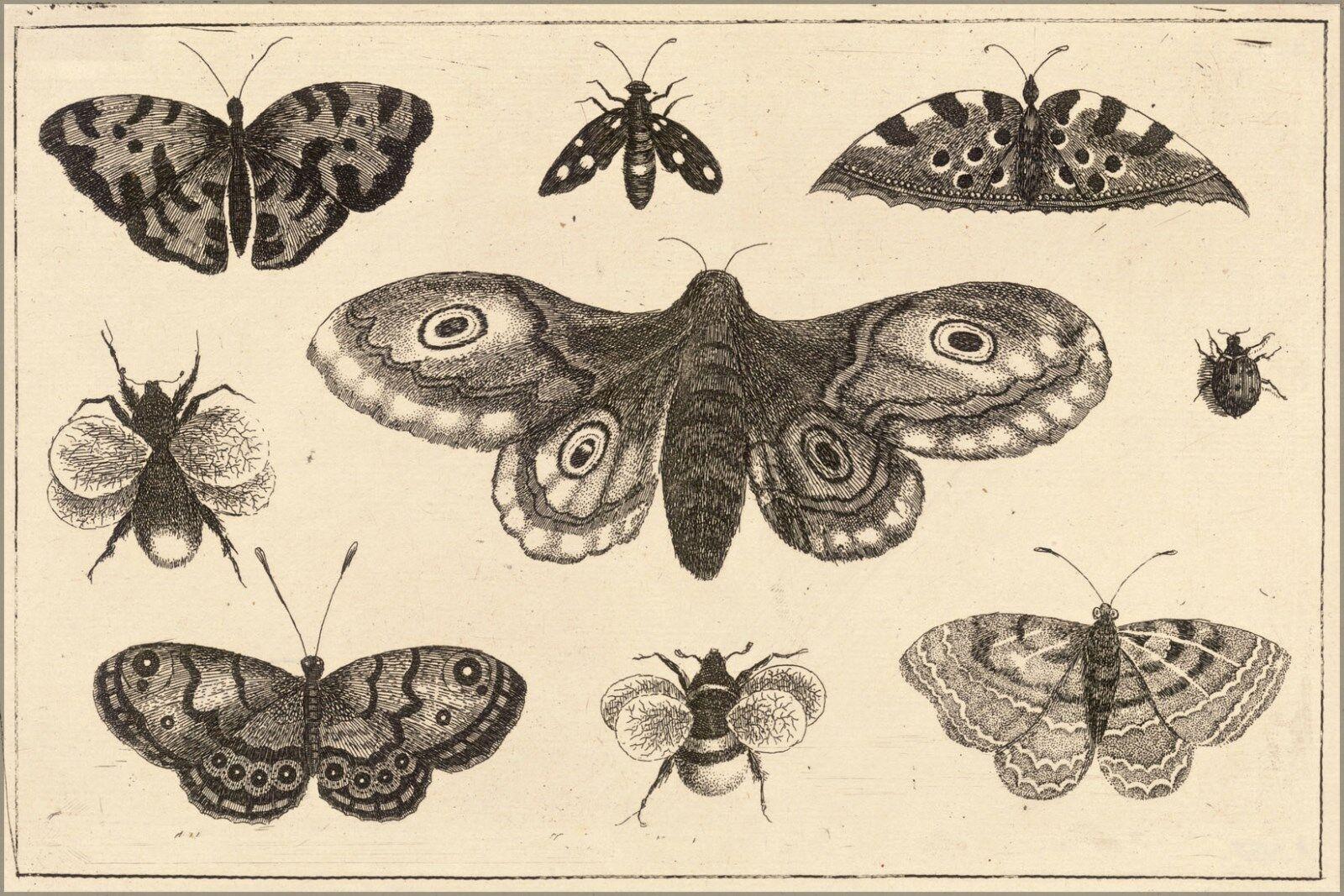 Plakat, Viele Größen; Wenceslas Hollar - ein Motte, Schmetterlinge, und Bienen