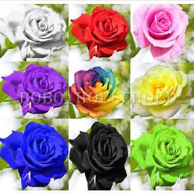 50Pcs Semillas Rosas Arcoiris flores Planta jardín raro Multicolor Azul púrpura