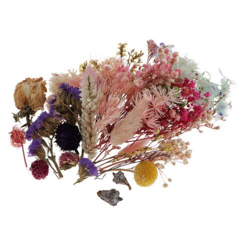 Natürliche Blumen Blüten Getrocknete Gepresste Blätter DIY Bastelbedarf